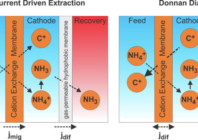 Exploiting Donnan Dialysis to Enhance Ammonia Recovery in an Electrochemical System